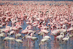 FlamingoConvention